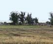 23-cotul-donului-foste-cimitire-romanesti-ievstratovski