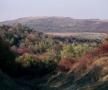 Valea Ichelului văzută de pe dealul Cupcii